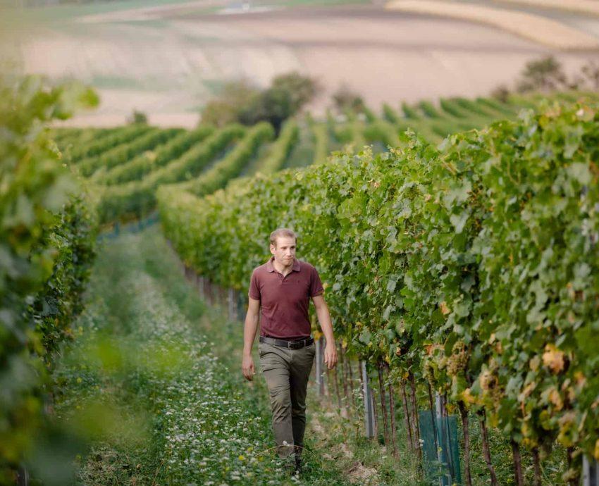 der-Weinbauer-Stefan-Pratsch-Weingarten